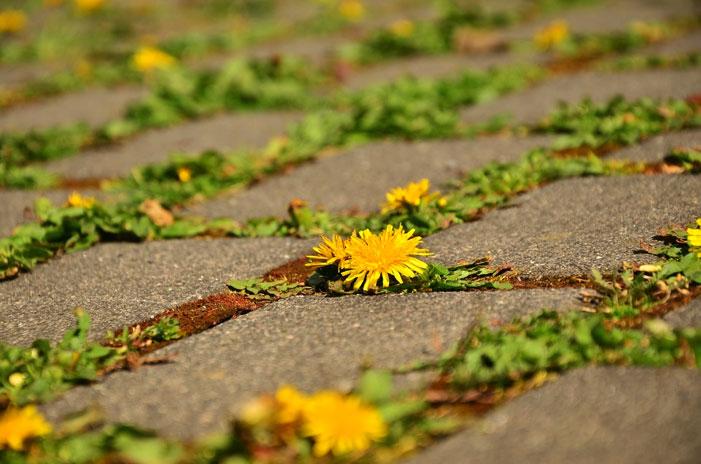 EcoAqua pavimento drenante